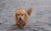 Pies szuka właściciela [Stowarzyszenie Kundelek]