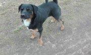 Pies do adopcji [23.01.2017]